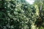 More Climbing Vines