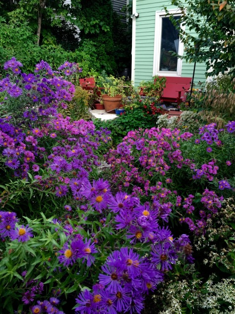 The fall asters