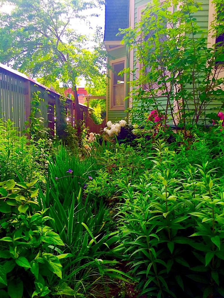 Entertaining Family: Rain Garden