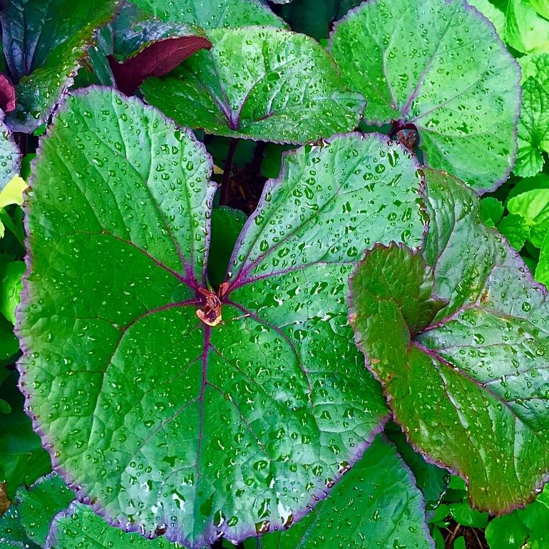 Entertaining Family: Leaves of Green