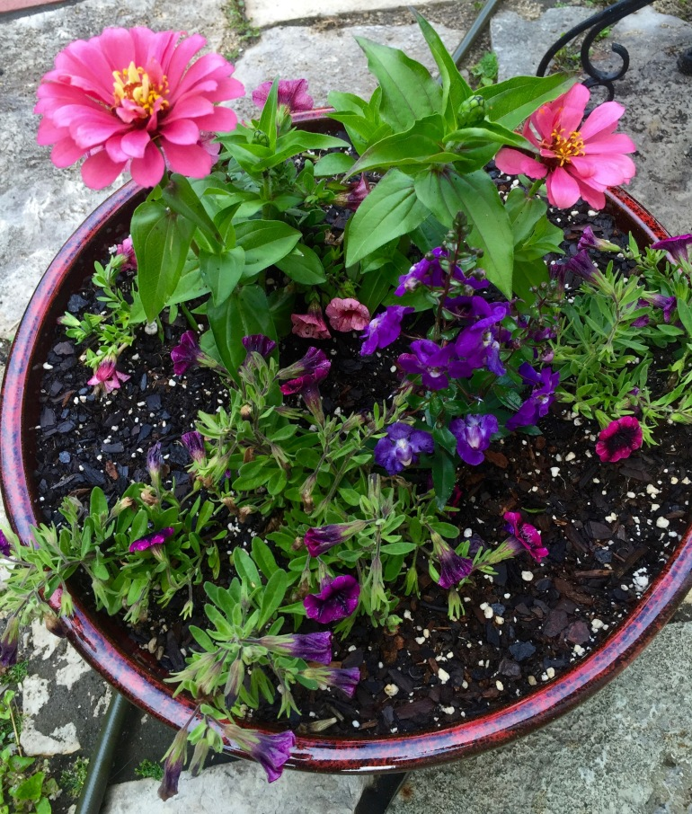 Entertaining Family: Pink and Purple Container