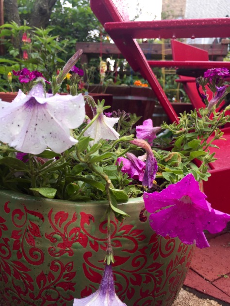 Entertaining Family: Container Garden