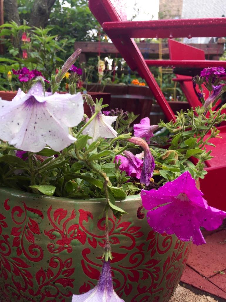 Entertaining Family: Container Garden